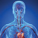 BODY-SYSTEM-ORGANS-spiritual-healing-img-01